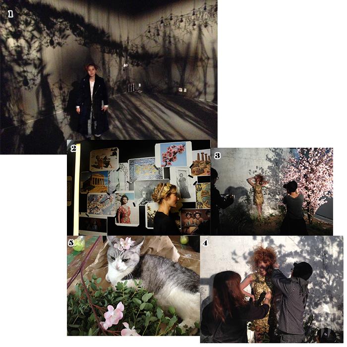 1. 알레프 프로젝트 전시장. 이번 화보의 모티프인 '빛과 그림자'를 발견한 바로 그 곳! 2. 화보에 영감을 준 시안들. 3,4. 커다란 아몬드 나무에서 떨어지는 그림자를 이용해 신비로운 느낌을 더했다. 5. 꽃비를 맞고 '꽃고양이가' 된 조아조아 스튜디오의 마스코트, 고양이 알렉.