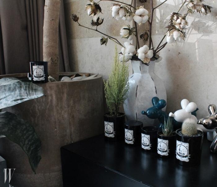 다 쓴 향초 병은 화분으로 활용한 황지희의 센스.