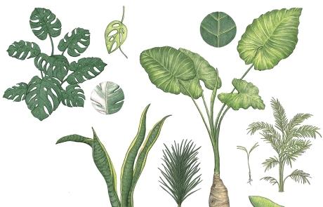 식물의 마음