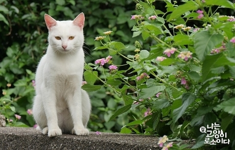 #W쇼미더무비 – 나는 고양이로소이다