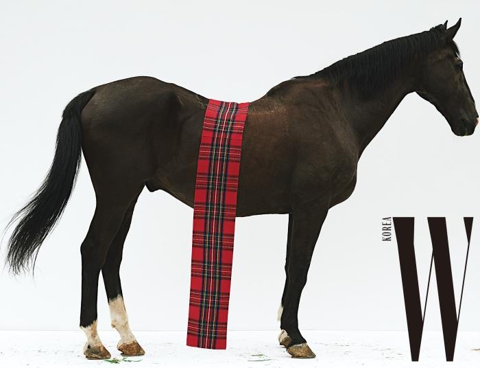 말 등에 걸친 타탄체크 머플러는 Burberry 제품.