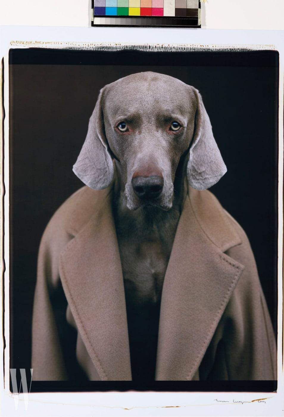 아이코닉 101801 코트를 걸친 강아지. 윌리암 웨그만의 작품