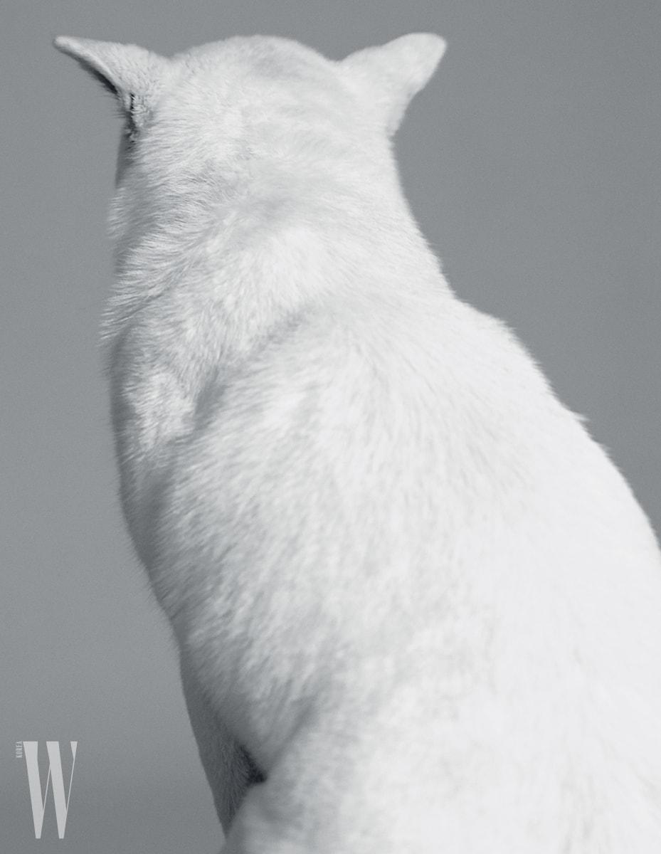 1962 년천연기념물 제53호로 지정된한국특산의진돗개 .