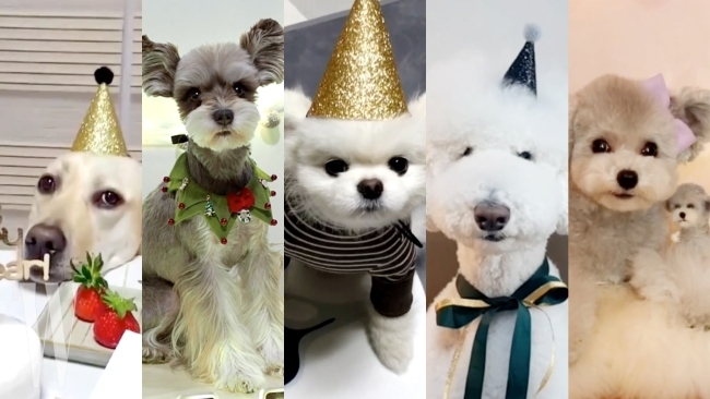 HAPPY 댕댕이 YEAR