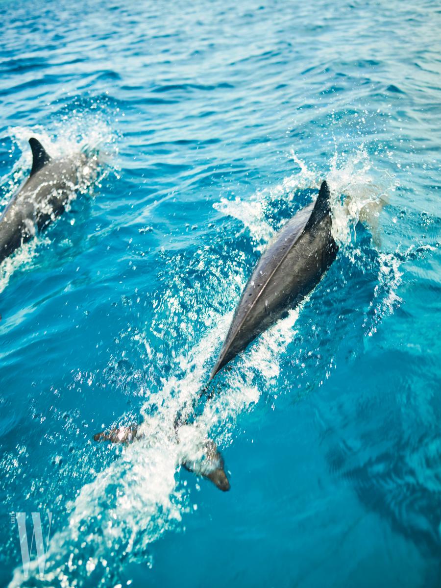 적적한 바다에서 만난 깜짝 손님, 긴부리돌고래들.