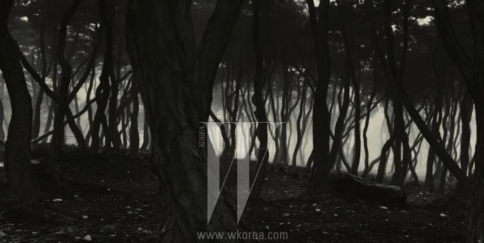 배병우의 소나무 사진은 한국적 아름다움에 대한 하나의 상징이자 기준이다. 평생 새벽 빛 속에 숲을 드나들며 나무를 찍어온 경험은 그를 생명과 자연에 골몰하는 철학자로 만들었다.