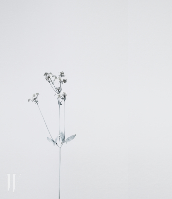 A plant, painted white, photographed against a white background