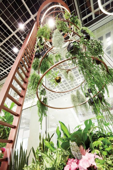 6미터가량의 천장 가득 다채로운 식물이 장식된 에어 플랜트.
