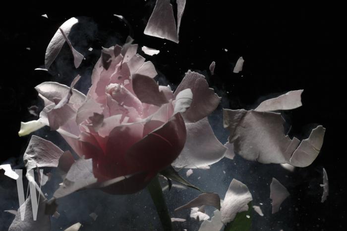Liquid nitrogen with exploding pink rose